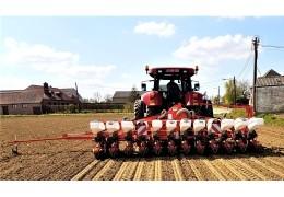 Semis de betteraves et chicorées - Printemps 2021